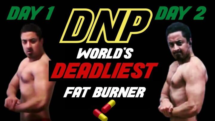 DNP / Dinitrophenol |World's Strongest Fat Burner| Science, Studies, Results, Review, Bloods-Pt.2/2